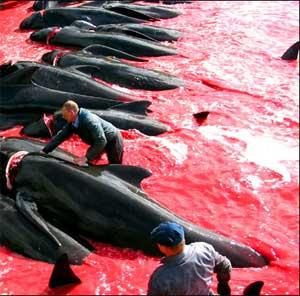 Caça às baleias